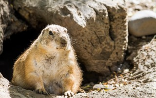 Fiduciary Groundhog Day: What Just Happened?